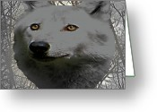 Photograph Of Alpha Wolf Greeting Cards - The Wilds Of Nature Greeting Card by Debra     Vatalaro