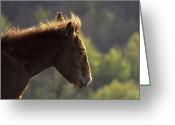 Caballo Greeting Cards - The wind in my face Greeting Card by Fernando Alvarez