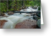 Colorado Mountain Greeting Cards Greeting Cards - The Wisdom of the Woods Greeting Card by Tim Reaves