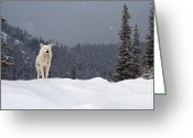 Snowing Greeting Cards - The Wolf Greeting Card by Evgeni Dinev