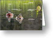 Colorful Birds Photo Greeting Cards - The Wood Ducks Greeting Card by Bill  Wakeley