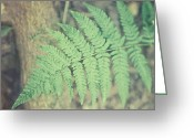 Brown Leaf Greeting Cards - The Woodland Fern Greeting Card by Lisa Russo