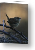 Wren Greeting Cards - The Wren Greeting Card by Christopher Kirby