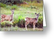 Fawns Greeting Cards - The Yearlings Greeting Card by Lana Trussell