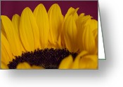 Andreas Levi Greeting Cards - The Yellow Blossom Leaves Greeting Card by Andreas Levi