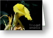 Original Equine Portrait Photo Greeting Cards - The Yellow Greeting Card by David Ackerson
