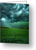 Yellow Photo Greeting Cards - There Came a WInd Greeting Card by Phil Koch
