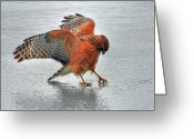 Animal Themes Greeting Cards - Thirst Greeting Card by Photo by Michael Oberman