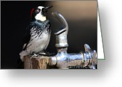 Thirsty Greeting Cards - Thirsty Woodpecker . 40D9074 Greeting Card by Wingsdomain Art and Photography