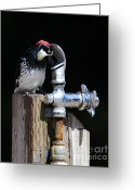 Thirsty Greeting Cards - Thirsty Woodpecker . 40D9079 . Vertical Cut Greeting Card by Wingsdomain Art and Photography