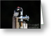 Thirsty Greeting Cards - Thirsty Woodpecker . 40D9079 Greeting Card by Wingsdomain Art and Photography