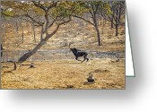 Waterhole Greeting Cards - This is Botswana No.  3 - Sable on the Run Greeting Card by Paul W Sharpe Aka Wizard of Wonders