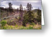 Kamloops Greeting Cards - This is British Columbia No.38 - Kamloops Hills Have Life  Greeting Card by Paul W Sharpe Aka Wizard of Wonders