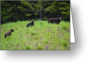 Black Bear Cubs Greeting Cards - This is British Columbia No.50 - Black Bear Mother and Cubs Greeting Card by Paul W Sharpe Aka Wizard of Wonders