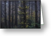 Forest Floor Greeting Cards - This is British Columbia No.54 - Misty Mystical Moss Forest II Greeting Card by Paul W Sharpe Aka Wizard of Wonders