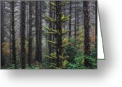 Forest Floor Greeting Cards - This is British Columbia No.54F - Misty Mystical Moss Forest III Greeting Card by Paul W Sharpe Aka Wizard of Wonders