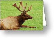 Green Pasture Greeting Cards - This Is The Life Greeting Card by Michael Peychich