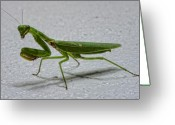 Mantis Greeting Cards - This is the Philippines 3 - Praying Greeting Card by Paul W Sharpe Aka Wizard of Wonders