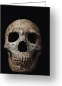 Extinction Greeting Cards - This Neandertal Skull From Wadi Amud Greeting Card by Ira Block