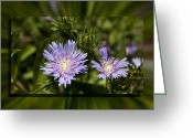 Charles Warren Greeting Cards - Thistle 131 Greeting Card by Charles Warren