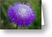 Tamyra Ayles Greeting Cards - Thistle I Greeting Card by Tamyra Ayles
