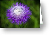 Tamyra Ayles Greeting Cards - Thistle II Greeting Card by Tamyra Ayles