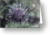 Spine Greeting Cards - Thistle Greeting Card by Joana Kruse