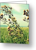 Beachy Greeting Cards - Thistle on the Beach Greeting Card by Michelle Calkins