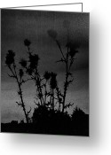 Hakon Greeting Cards - Thistles Greeting Card by Hakon Soreide