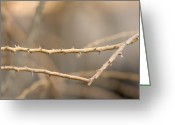 Property Released Photography Greeting Cards - Thorny Desert Plant Inside The Desert Greeting Card by Joel Sartore