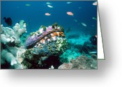 Immobile Greeting Cards - Thorny Oyster Greeting Card by Georgette Douwma