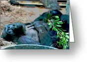 Ancestors Greeting Cards - Those Gorilla Eyes Greeting Card by Vijay Sharon Govender