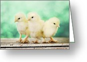 Kitchen Photos Greeting Cards - Three Amigos Greeting Card by Amy Tyler