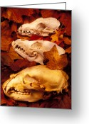 Concepts Glass Art Greeting Cards - Three Animal Skulls Greeting Card by Garry Gay