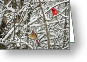 Cardinals. Wildlife. Nature. Photography Greeting Cards - Three Birds Greeting Card by Jennifer Wosmansky