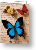 Yellow And Red Greeting Cards - Three butterflies Greeting Card by Garry Gay