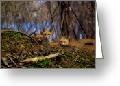 Vulpes Greeting Cards - Three Cute Kit Foxes At Attention Greeting Card by Thomas Young