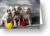 Innocence Greeting Cards - Three Dalmatian puppies  Greeting Card by Garry Gay