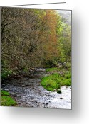 Williams Greeting Cards - Three Forks Williams River  Greeting Card by Thomas R Fletcher