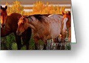 Western Digital Art Greeting Cards - Three Horses of a Suspicious Corral Greeting Card by Gus McCrea