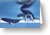 Sea Life Digital Art Greeting Cards - Three Humpback Whales Rest Greeting Card by Corey Ford