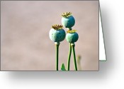 Plant Greeting Cards - Three Greeting Card by Kimberly Gonzales