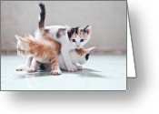 Three Animals Greeting Cards - Three Kittens Greeting Card by Photos by Andy Le