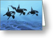 Sea Life Digital Art Greeting Cards - Three Male Killer Whales Swim Greeting Card by Corey Ford