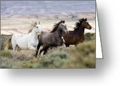 Wild Horses Greeting Cards - Three Mares Running Greeting Card by Carol Walker