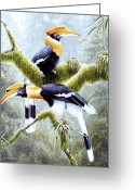 Hornbill Painting Greeting Cards - Three Greeting Card by Michael Oberhofer