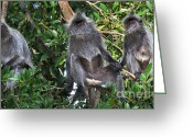 Silvered Leaf Monkey Greeting Cards - Three Monkeys Greeting Card by Louise Heusinkveld