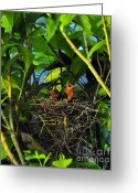 Cardinals. Wildlife. Nature. Photography Greeting Cards - Three of a Kind Greeting Card by Al Powell Photography USA