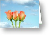 Orange Flower Photo Greeting Cards - Three Roses Greeting Card by Peter Chadwick LRPS