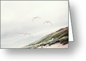 Three Animals Greeting Cards - Three Seagulls At Beach Greeting Card by Elisabeth Schmitt